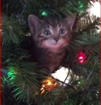 Kitten Ornaments