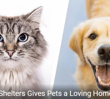 Clear the Shelters August 19 at Shorewood and Oswego ONLY