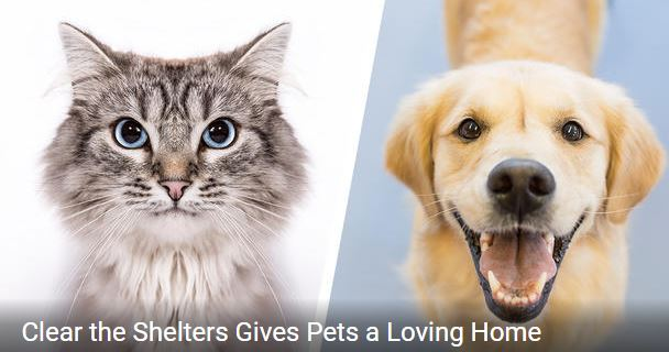 Clear the Shelters August 18 at Old Town and Downers Grove – DETAILS