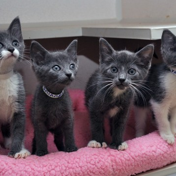 All kittens (under 1 yr), Adopt one, get another half price.