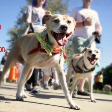 Save the date! Walk for Wags Walkathon September 8 – DETAILS