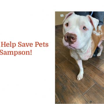 Meet Sampson!